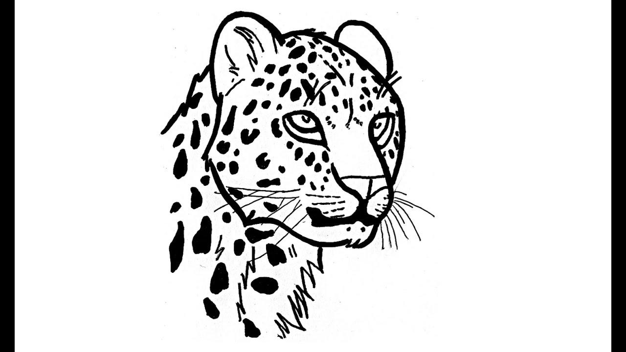 Wie Zeichnet Man Tiere Jaguar Tutorial Youtube