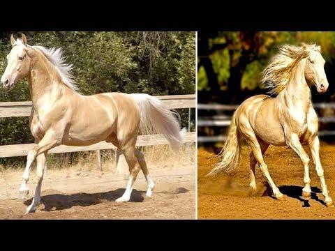 10 Esotiche Razze Di Cavalli Che Sono Unici Al Mondo