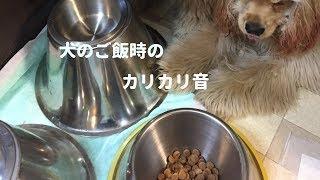 愛犬達の食事風景を撮ってみました。あのカリカリ音がたまらなく好きで...
