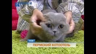 В Перми открылся фешенебельный отель для кошек(Игры с мохнатыми друзьями, отдых и спа-процедуры... Как мы уже сообщали, в Перми открылась первая гостиница..., 2016-07-08T05:06:18.000Z)