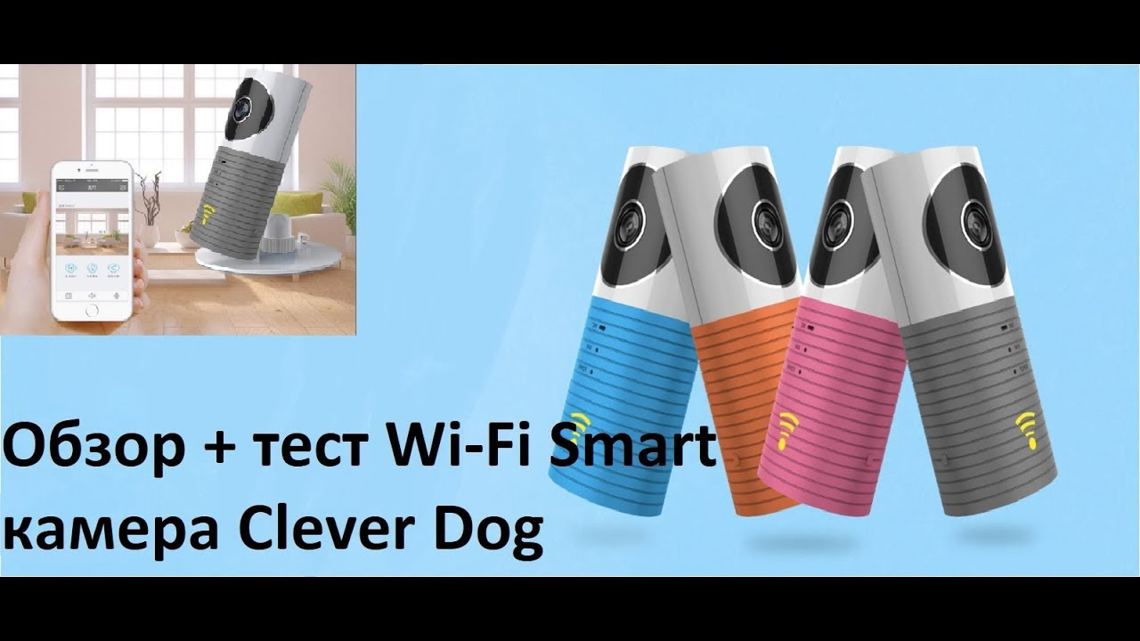 Clever Dog Camera Review