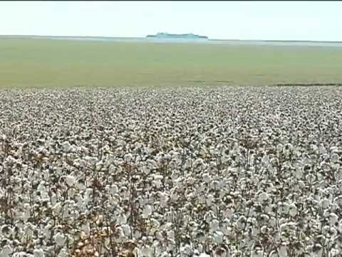 Documentary Cotton from Mato Grosso