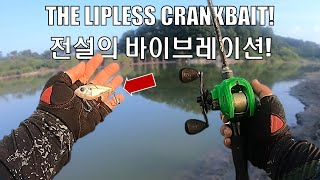 Bass Fishing NON STOP ACTION On The LIPLESS CRANKBAIT Ft Free Rapala Sufix T Shirt Give Away