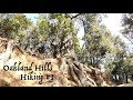 Hiking with a Dog Oakland Hills Hiking with German Shepherd Part 1 of 4