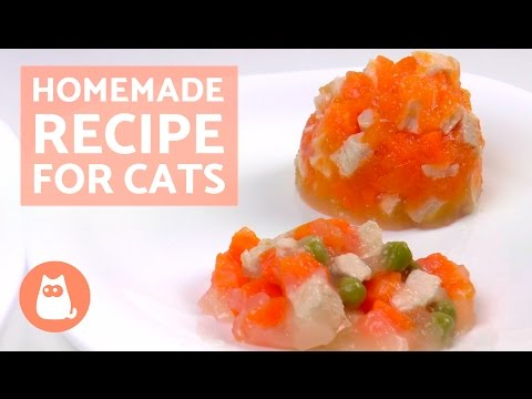 Seasonal Homemade Recipe For Cats : Homemade Chicken Cat Food