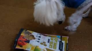 엑스펫 강아지 간식 고민하다가 로투스 도그 소프트베이킹…