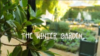 Beth's Winter Garden Tour | IN BETH'S GARDEN