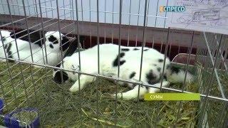 В Сумах состоялась выставка кроликов(, 2015-12-07T18:58:25.000Z)