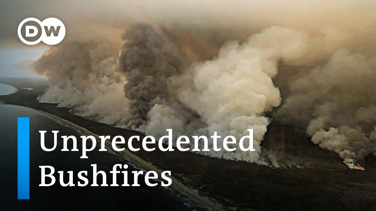 Australia bushfires - a national catastrophe   DW News Смотри на OKTV.uz