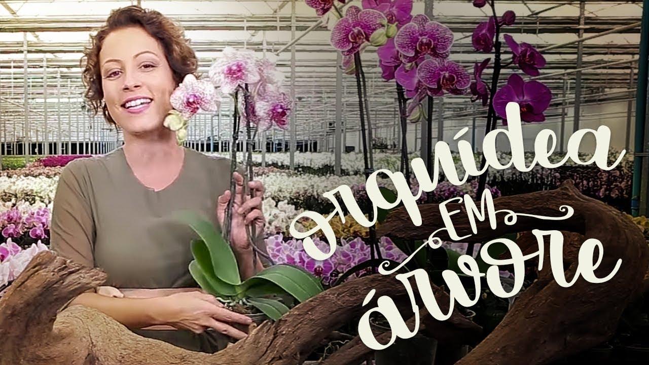 Plante Orquidea Na Arvore Com Esta Dica Facil Youtube