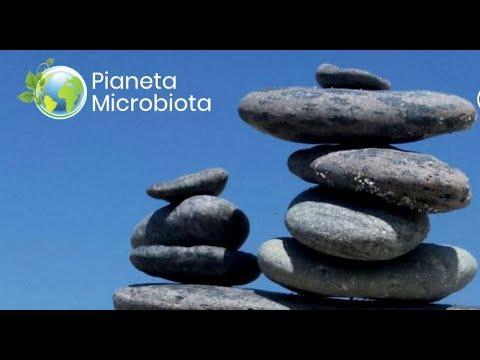 introduzione al microbiota da pianetamicrobiota