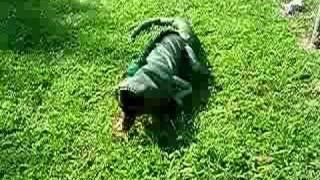 Dachshund In An Iguana Costume