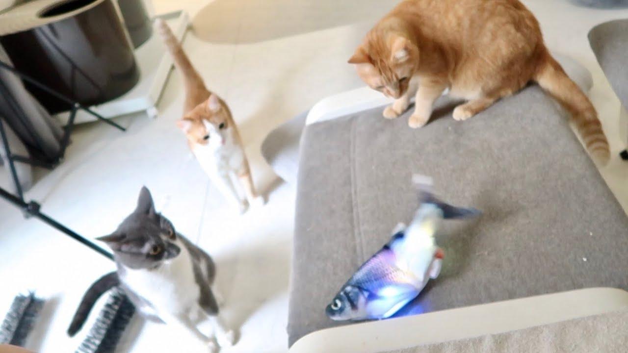シュールすぎるオモチャにドン引きする猫www