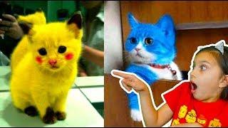 СМОТРИ САМЫЕ СМЕШНЫЕ КОТЫ ЛУЧШИЙ НЕ ЗАСМЕЙСЯ ЧЕЛЛЕНДЖ Funny Cats Попробуй не засмеяться Валеришка