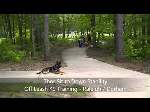 1yo German Shepherd 'Thor' Before and After Video - Raleigh Durham Dog Training
