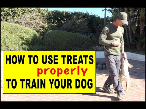 How to Use Treats in Dog Training - Theory and Delivery of Treats for Puppies and Adult Dogs