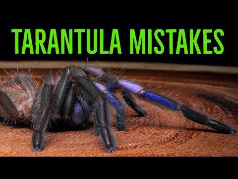 MORE TOP 10 MISTAKES Keeping Tarantulas & Spiders!