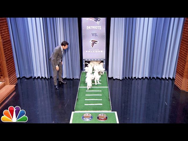 Puppies Predict Super Bowl LI