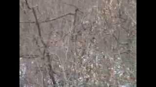 охота на зайца с гончими (Грузия)-РПГ Б-Азарт(охота на зайца с гончими (Грузия) Hunting the hare (Georgia) -10С., 2013-08-01T21:24:05.000Z)