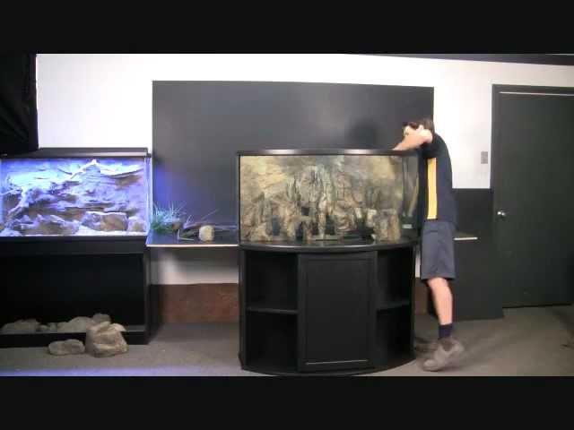 Reptiles Pets Australia Aquarium Reptile Pet 3d