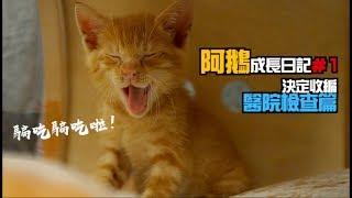 @上發條俱樂部 阿鵝成長日記#1_決定收編/醫院檢查/ASMR