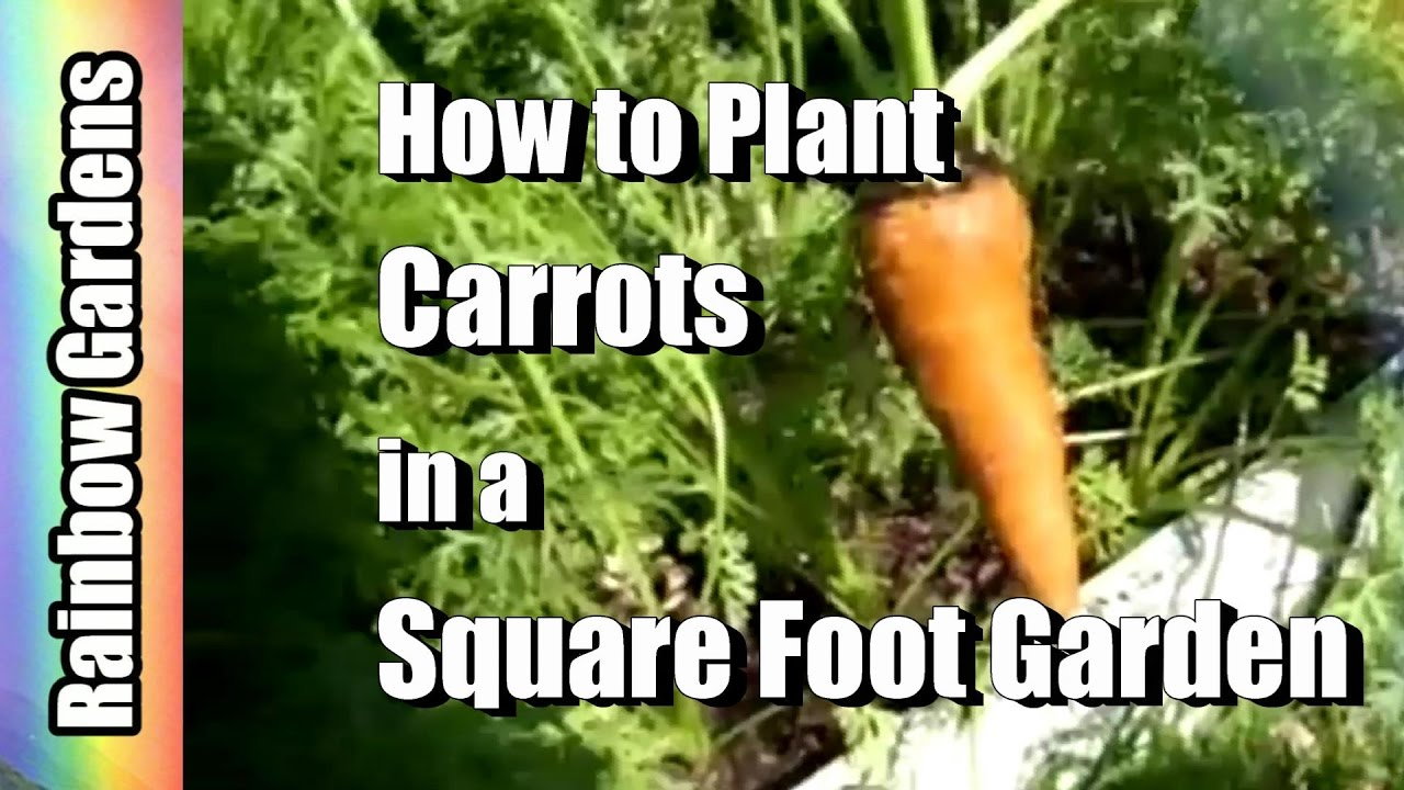 Square foot gardening book - How To Plant Carrots In A Square Foot Garden