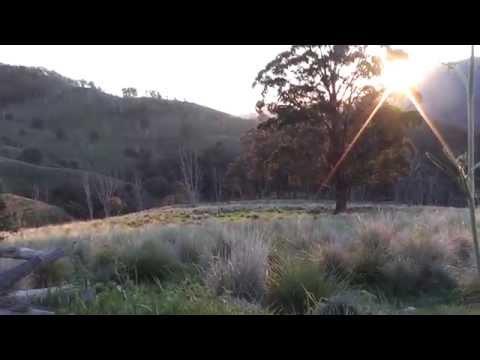 Pig Hunting - Upper Hunter Valley, NSW