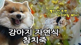 강아지 자연식 참치죽 만들기 Dog Natural Tuna Porridge