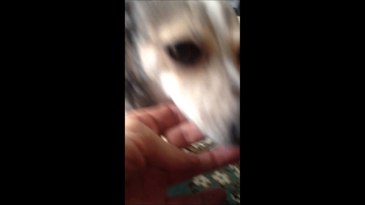 Dog lower jaw chatter - YouTube