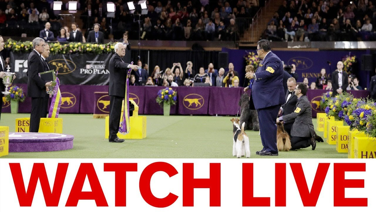Westminster Dog Show 2020 Results: Best of Breed Winners and ...