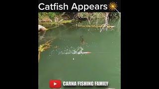 BIG FISH STRIKE 💥 #fishing #fish #shorts