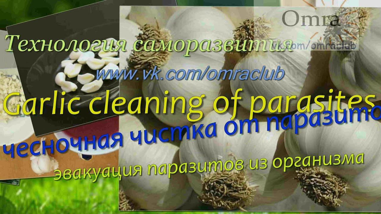 чистка от паразитов чесноком и молоком