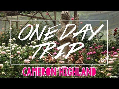 One Day Trip : Cameron Highland | Mimi Rhee |
