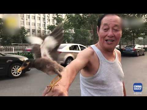Retired Beijinger Walks His Birds Like They Were Dogs