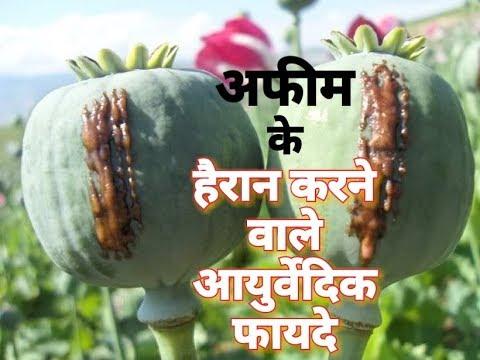 अफीम के हैरान करने वाले आयुर्वेदिक फायदे || Ayurvedic advantages of Opium (Afim)