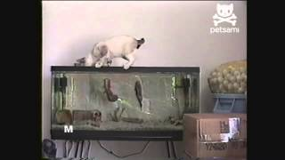 рыба укусила кота