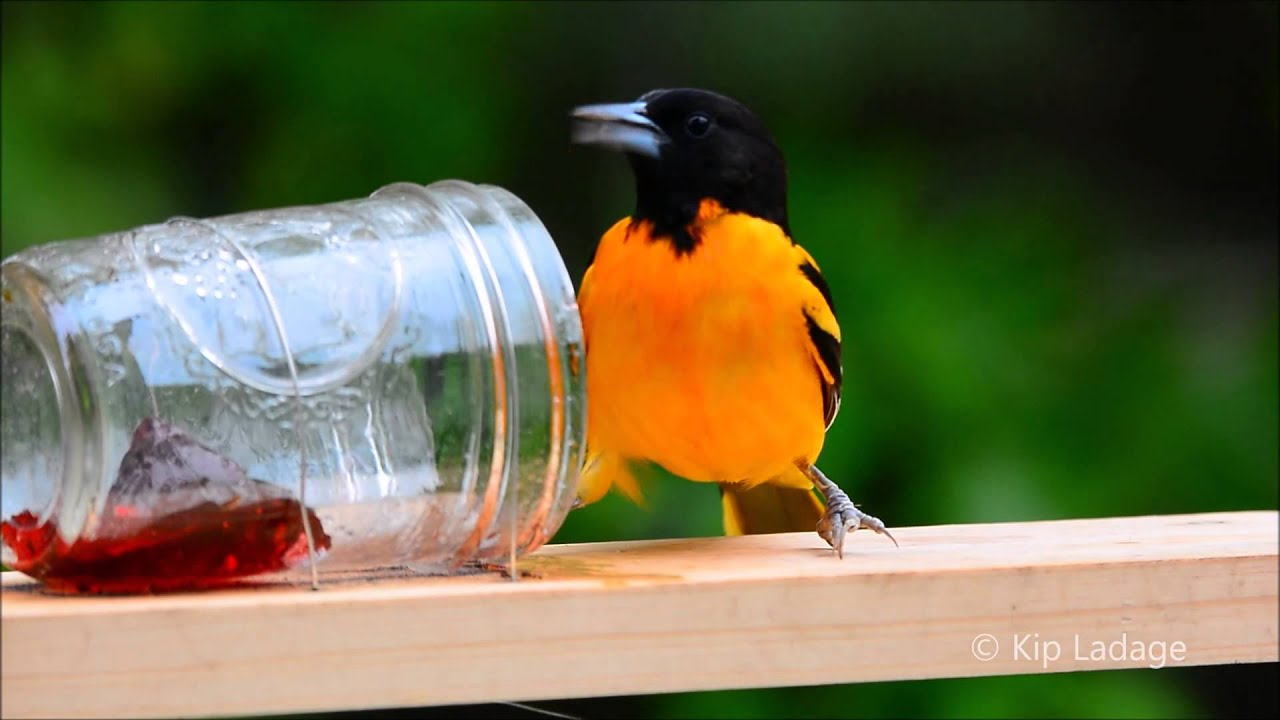 best click zoom oriole super to do feeder more products it deluxe birds