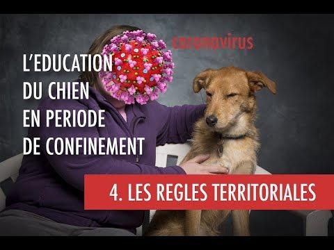 Comment gérer l'espace du chien dans la maison ? ( Coronavirus 4.Les règles territoriales)