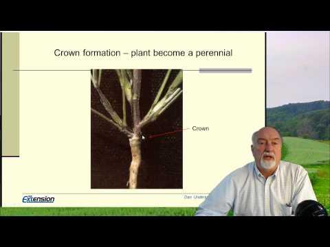 Forage management: Establishing alfalfa and hay (part 1/3)