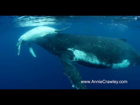 Humpback Whale Mom and Baby