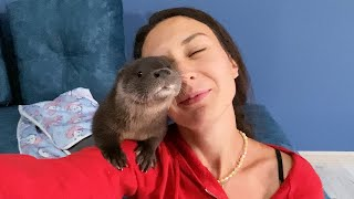 5 REASONS NOT TO HAVE A CUTE OTTER