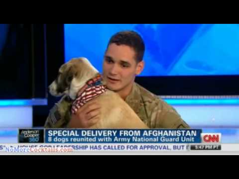 From Afghanistan with love: Soldiers reunited with dogs they promised to not leave behind