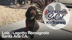 OffLeash SoCal - Off Leash Dog Training - Lola | Lagotto Romagnolo | Santa Ana, CA.