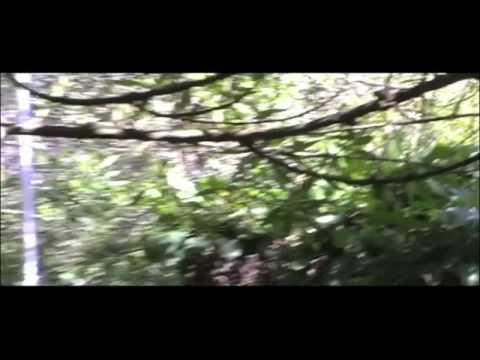 Evil Deer Trailer (Coming Soon)