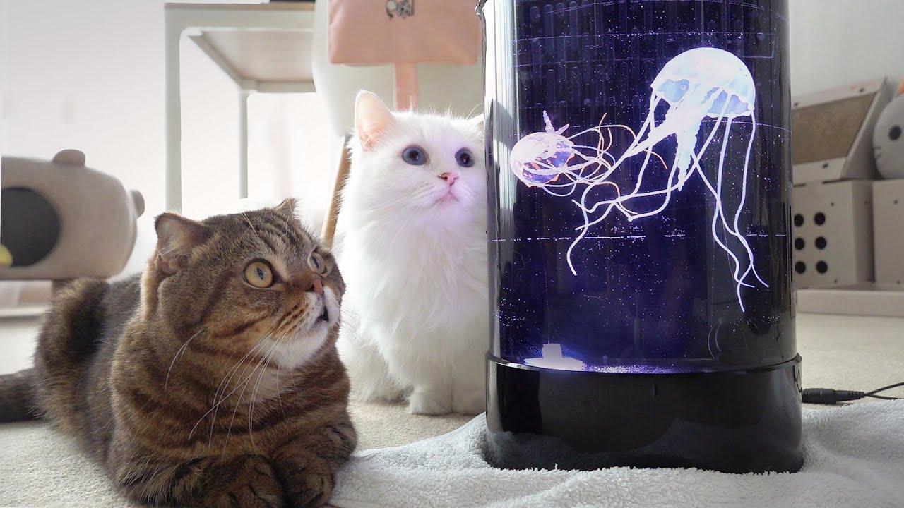 해파리에 고양이들이 푹 빠져버렸어요!