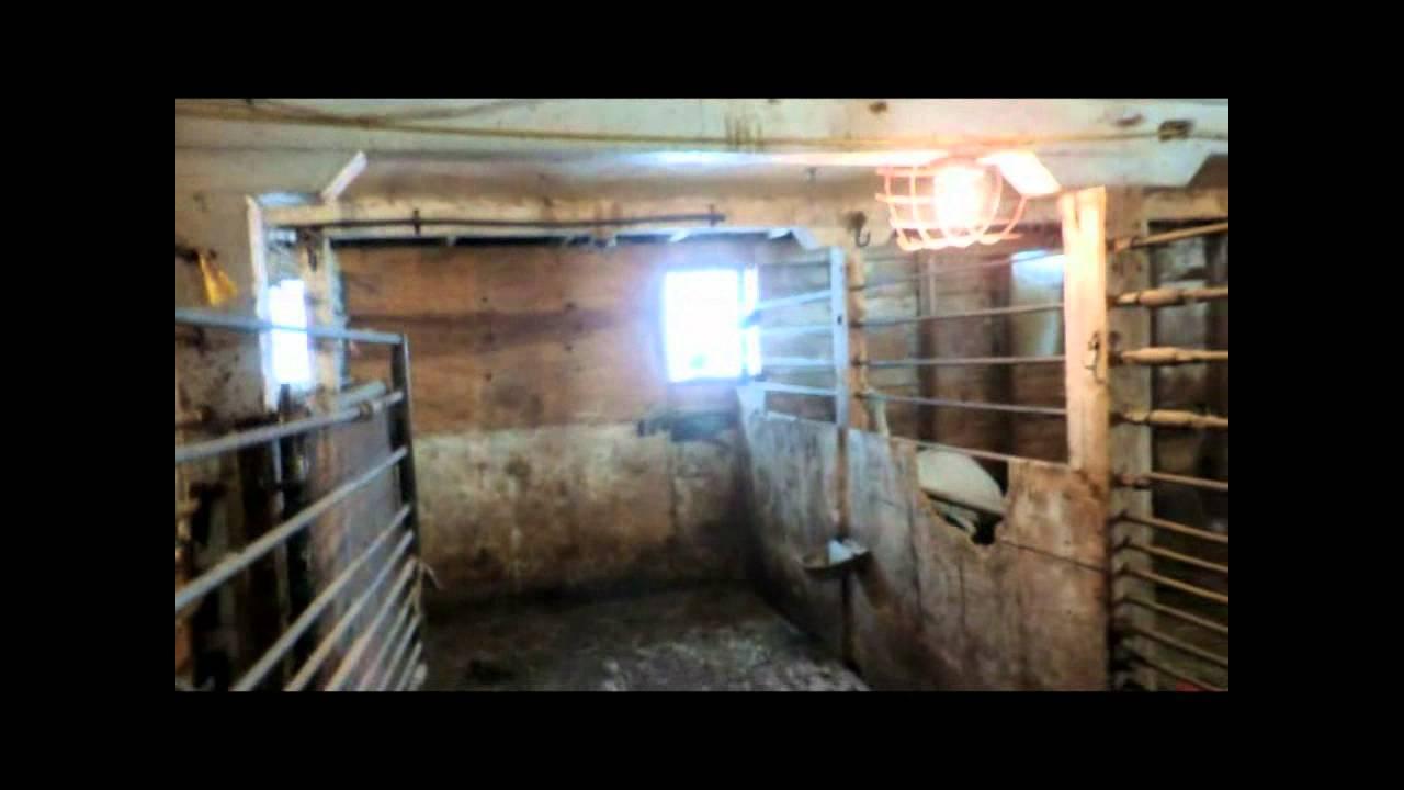 Guzoo Animal Farm Inside Barns Pt 2