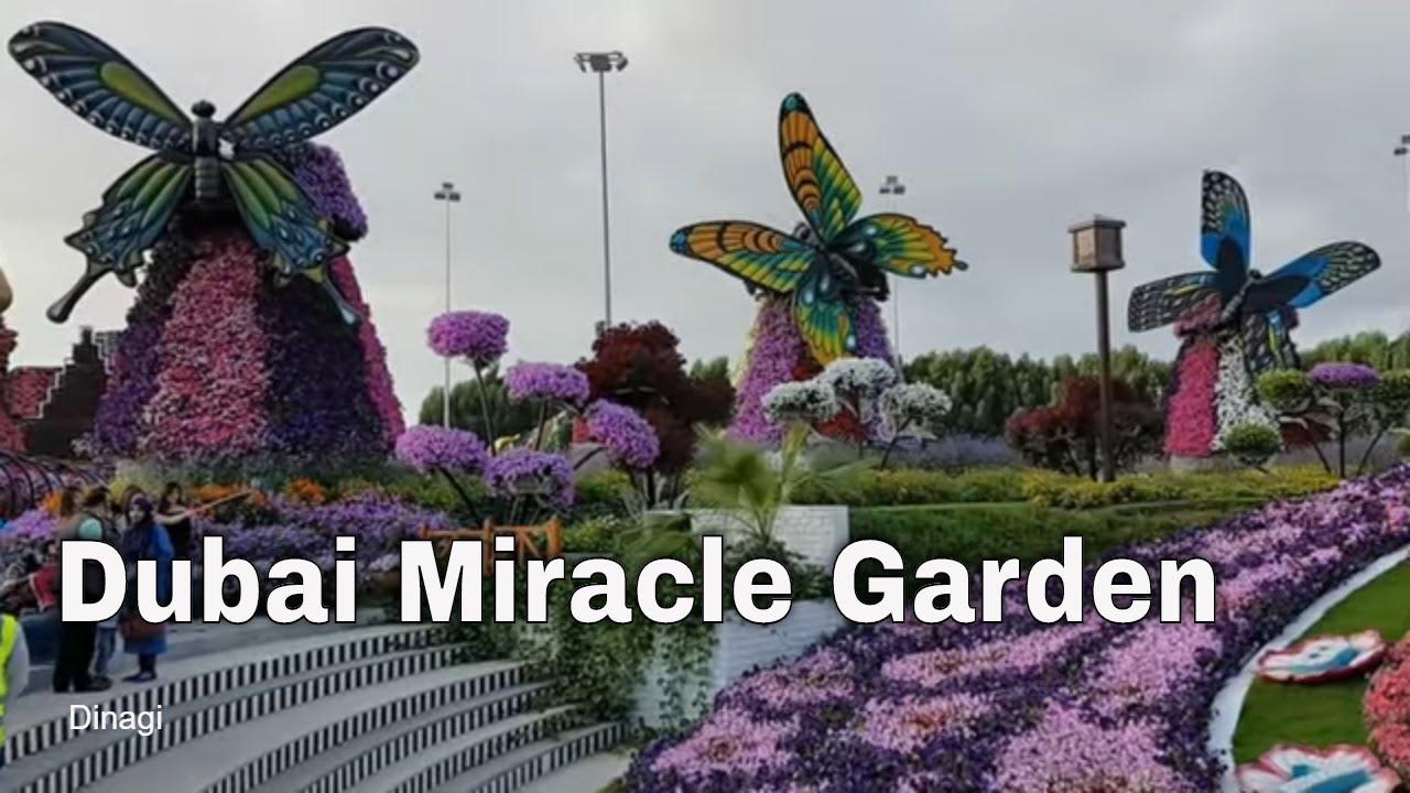 dubai miracle garden 2017 - youtube