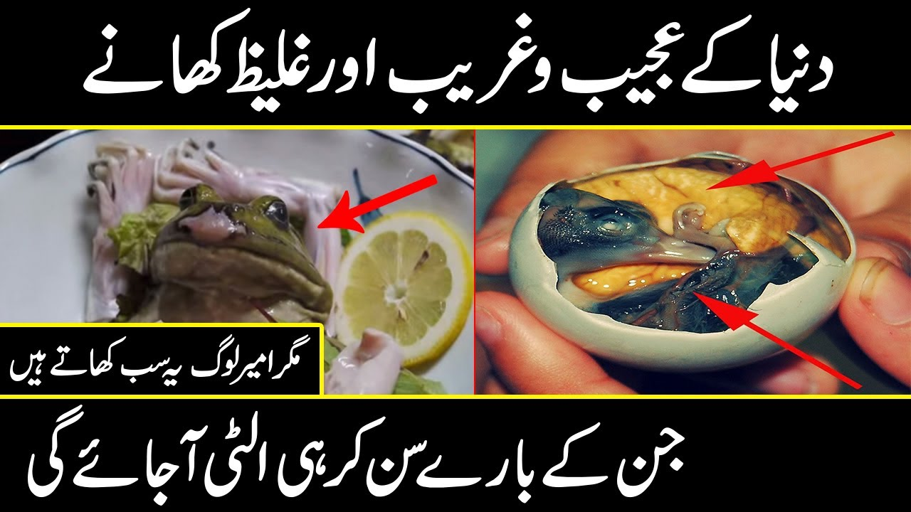 The Most Amazing FOOD EVER  SEEN | Would You Eat That? Urdu Cover
