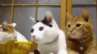 Кошки смешные моменты / Кот Атакует / Кот В Ванной