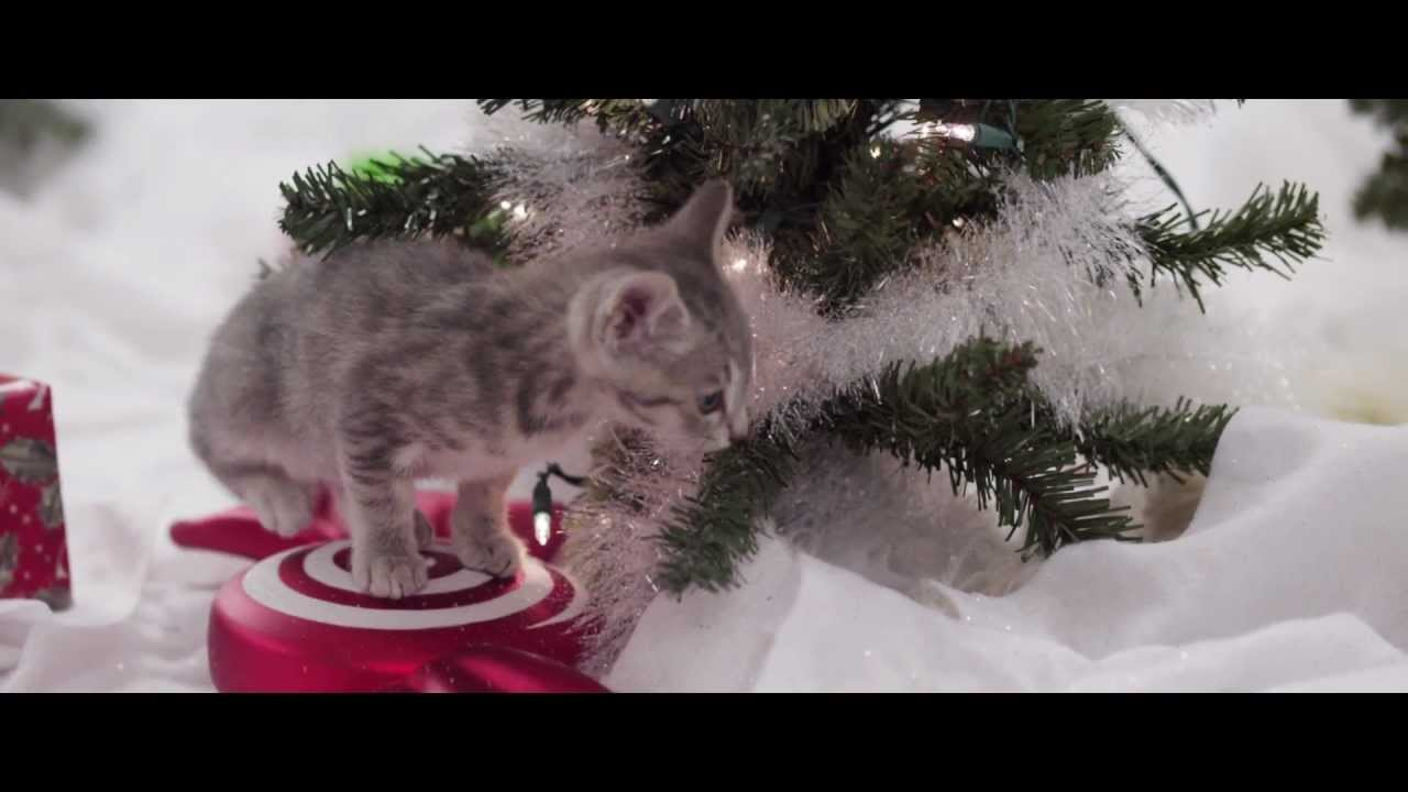 kittens and puppies have a merry christmas youtube
